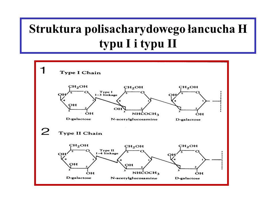 Podstawy genetyki grup krwi Krwinki czerwone grupy 0 i A2 mają duże ilości antygenu H.