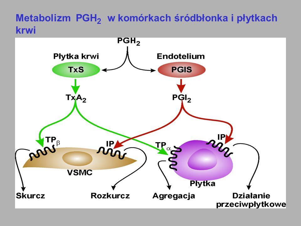 Metabolizm PGH 2 w komórkach śródbłonka i płytkach krwi