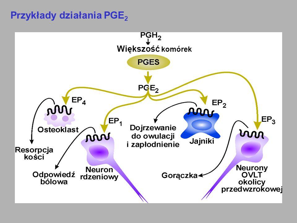 Przykłady działania PGE 2 Większość komórek