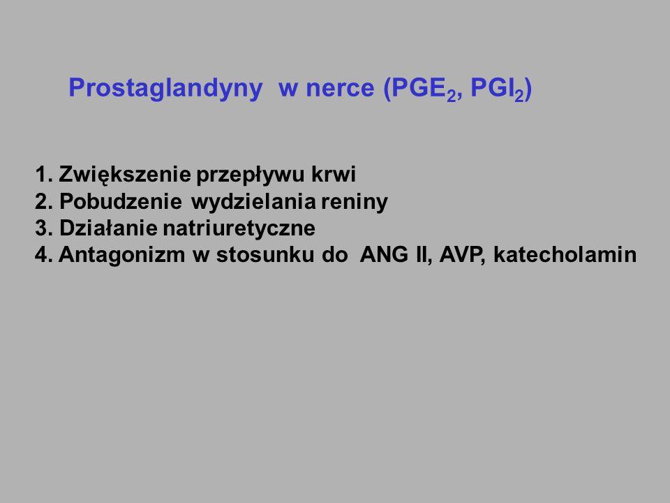 Prostaglandyny w nerce (PGE 2, PGI 2 ) 1. Zwiększenie przepływu krwi 2. Pobudzenie wydzielania reniny 3. Działanie natriuretyczne 4. Antagonizm w stos