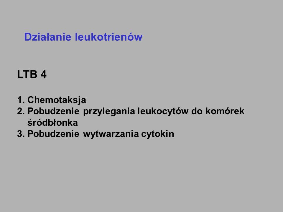 Działanie leukotrienów LTB 4 1. Chemotaksja 2. Pobudzenie przylegania leukocytów do komórek śródbłonka 3. Pobudzenie wytwarzania cytokin