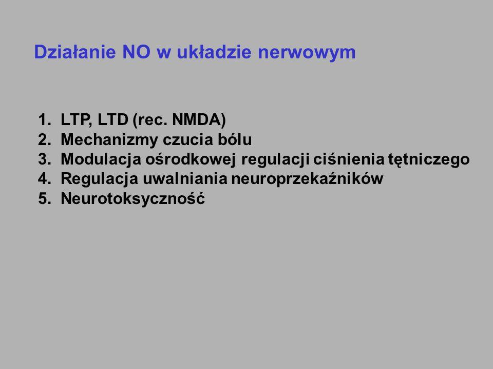 Działanie NO w układzie nerwowym 1. LTP, LTD (rec. NMDA) 2. Mechanizmy czucia bólu 3. Modulacja ośrodkowej regulacji ciśnienia tętniczego 4. Regulacja