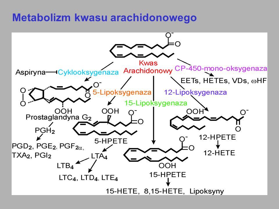 Peptydoleukotrieny (grupy cysteinylowe) (LTC 4, LTD 4, LTE 4 ) 1.Skurcz mięśni gładkich ( skurcz i pobudzenie wydzielania śluzu w oskrzelach) 2.