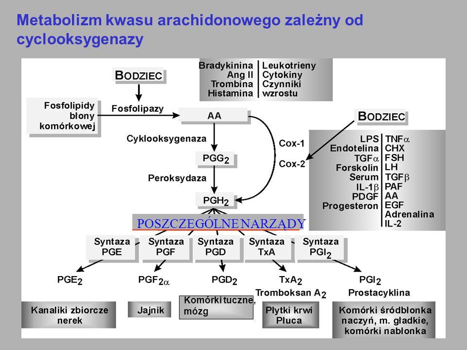 Metabolizm kwasu arachidonowego zależny od cyclooksygenazy POSZCZEGÓLNE NARZĄDY Komórki tuczne, mózg
