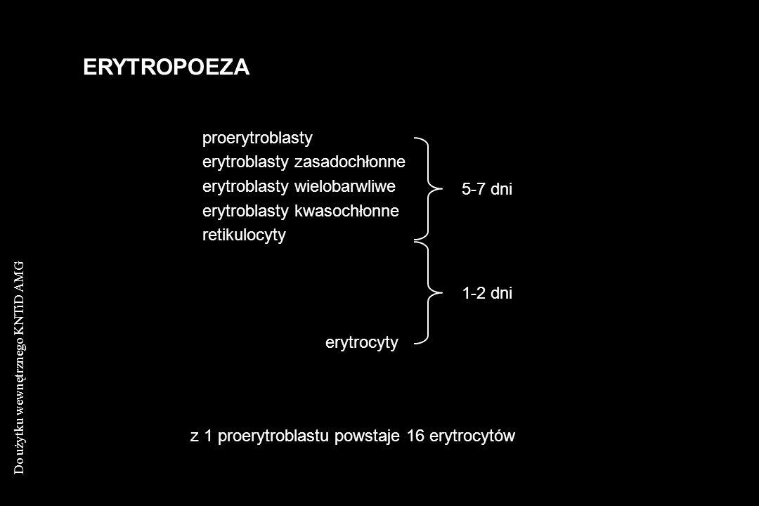 Do użytku wewnętrznego KNTiD AMG ERYTROPOEZA proerytroblasty erytroblasty zasadochłonne erytroblasty wielobarwliwe erytroblasty kwasochłonne retikuloc