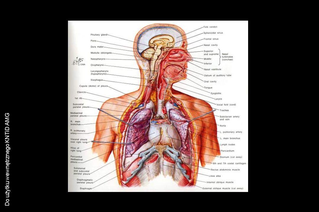 Do użytku wewnętrznego KNTiD AMG PLWOCINA Bezpośrednie badanie plwociny: WĘŻOWNICA CURSCHMANNA Włókna elastyczne Kryształy Charcota-Leydena Granulocyty eozynochłonne Erytrocyty Granulocyty obojętnochłonne