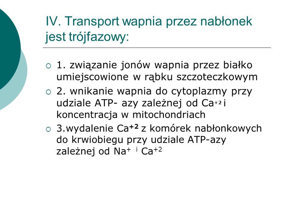 IV. Transport wapnia przez nabłonek jest trójfazowy:  1. związanie jonów wapnia przez białko umiejscowione w rąbku szczoteczkowym  2. wnikanie wapni