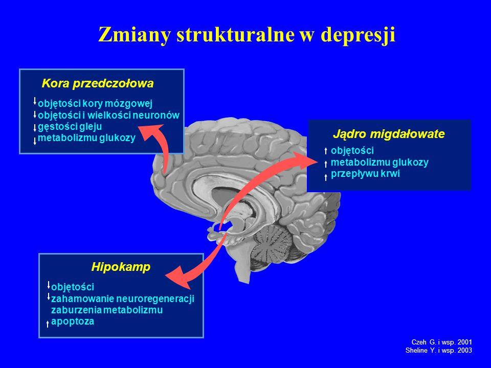 Zmiany strukturalne w depresji Kora przedczołowa objętości kory mózgowej objętości i wielkości neuronów gęstości gleju metabolizmu glukozy Jądro migdałowate objętości metabolizmu glukozy przepływu krwi Hipokamp objętości zahamowanie neuroregeneracji zaburzenia metabolizmu apoptoza Czeh G.