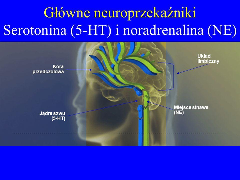 Główne neuroprzekaźniki Serotonina (5-HT) i noradrenalina (NE) Układ limbiczny Miejsce sinawe (NE) Kora przedczołowa Jądra szwu (5-HT)