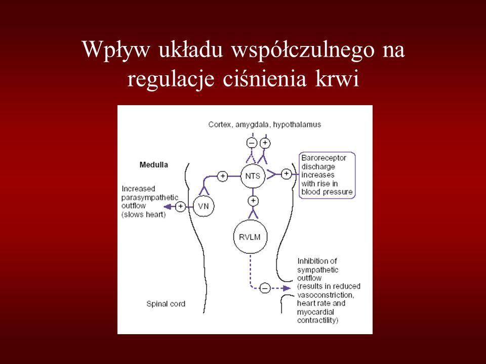 Wpływ układu współczulnego na regulacje ciśnienia krwi