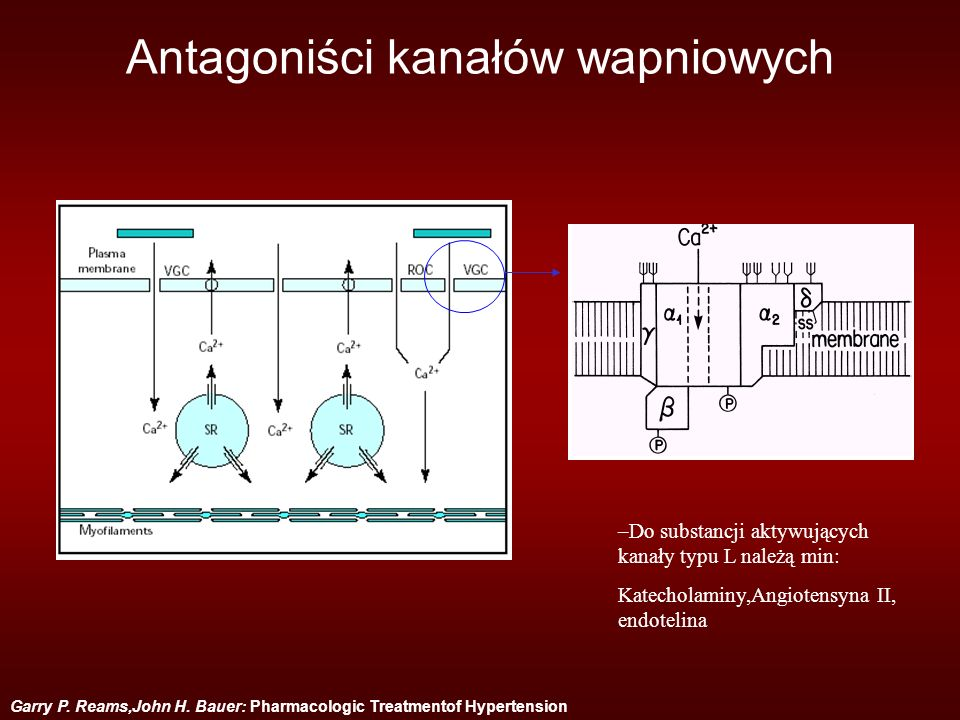 Garry P. Reams,John H. Bauer: Pharmacologic Treatmentof Hypertension Antagoniści kanałów wapniowych –Do substancji aktywujących kanały typu L należą m