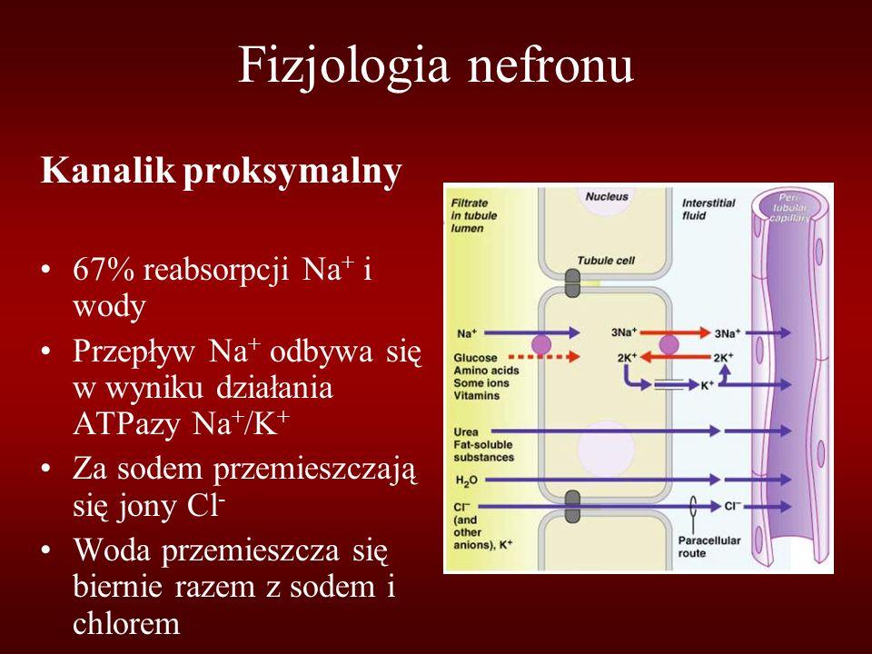 Fizjologia nefronu Kanalik proksymalny 67% reabsorpcji Na + i wody Przepływ Na + odbywa się w wyniku działania ATPazy Na + /K + Za sodem przemieszczają się jony Cl - Woda przemieszcza się biernie razem z sodem i chlorem