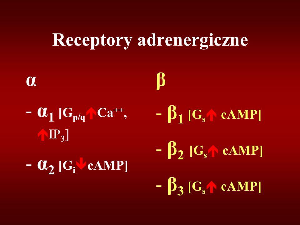 Receptory adrenergiczne α -α 1 [G p/q  Ca ++,  IP 3 ] -α 2 [G i  cAMP] β -β 1 [G s  cAMP] -β 2 [G s  cAMP] -β 3 [G s  cAMP]