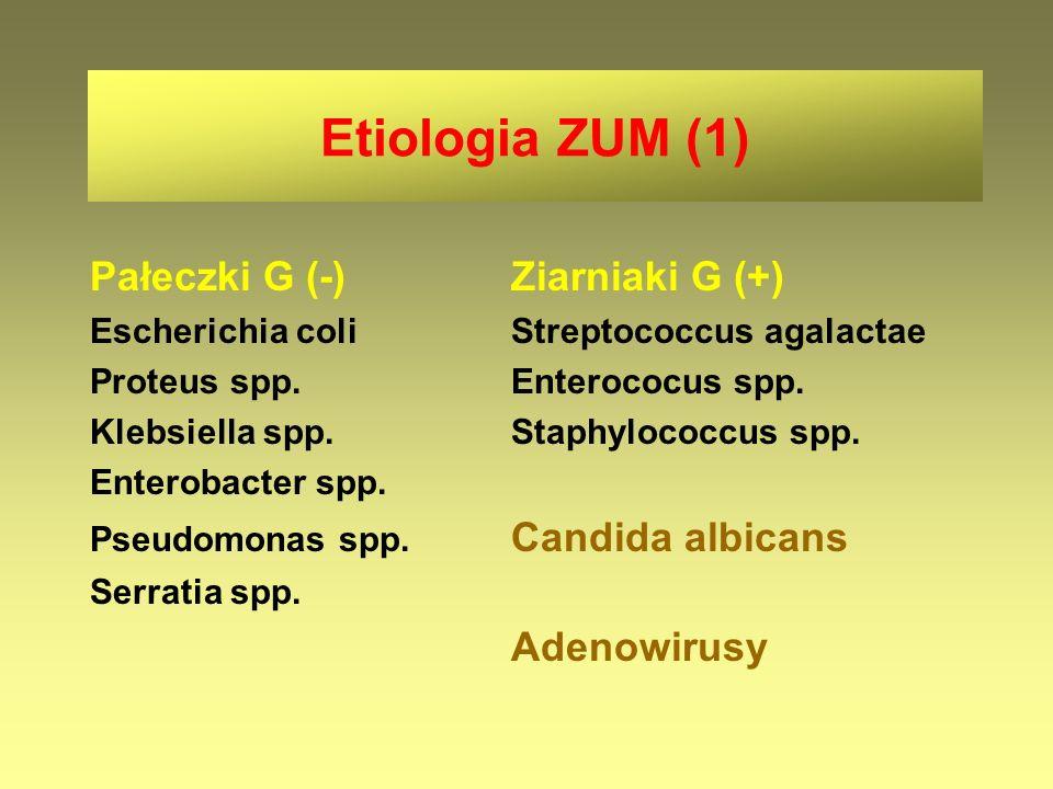 Pałeczki G (-)Ziarniaki G (+) Escherichia coliStreptococcus agalactae Proteus spp.Enterococus spp. Klebsiella spp.Staphylococcus spp. Enterobacter spp