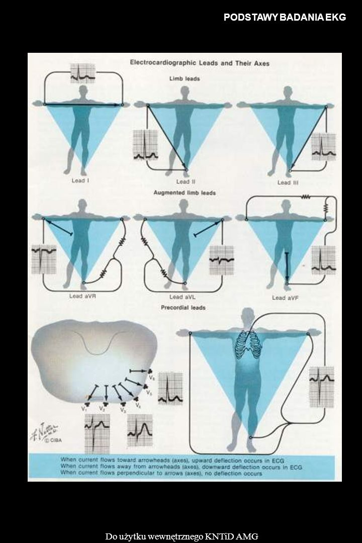 PODSTAWY BADANIA EKG Do użytku wewnętrznego KNTiD AMG