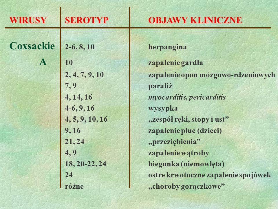 WIRUSY SEROTYPOBJAWY KLINICZNE Coxsackie 2-6, 8, 10herpangina A 10zapalenie gardła 2, 4, 7, 9, 10zapalenie opon mózgowo-rdzeniowych 7, 9paraliż 4, 14,