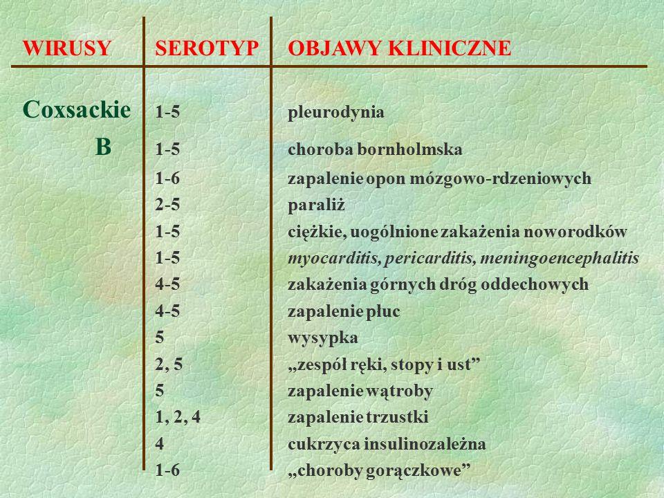 WIRUSY SEROTYPOBJAWY KLINICZNE Coxsackie 1-5pleurodynia B 1-5choroba bornholmska 1-6zapalenie opon mózgowo-rdzeniowych 2-5paraliż 1-5ciężkie, uogólnio