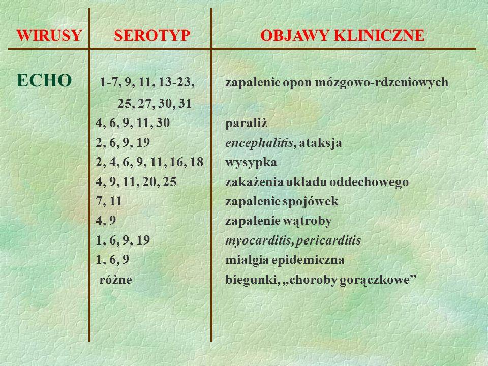 WIRUSY SEROTYPOBJAWY KLINICZNE ECHO 1-7, 9, 11, 13-23, zapalenie opon mózgowo-rdzeniowych 25, 27, 30, 31 4, 6, 9, 11, 30 paraliż 2, 6, 9, 19 encephali