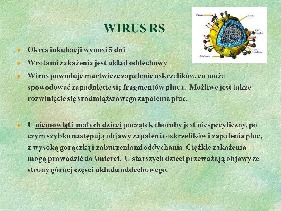 WIRUS RS  Okres inkubacji wynosi 5 dni  Wrotami zakażenia jest układ oddechowy  Wirus powoduje martwicze zapalenie oskrzelików, co może spowodować