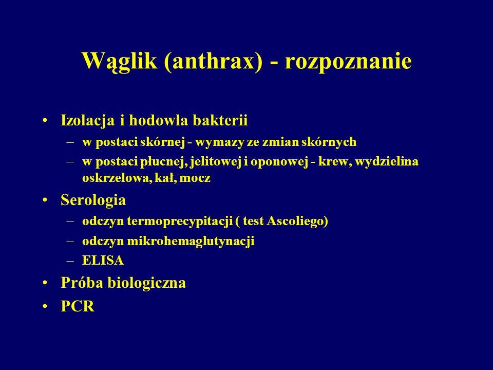 Wąglik (anthrax) - rozpoznanie Izolacja i hodowla bakterii –w postaci skórnej - wymazy ze zmian skórnych –w postaci płucnej, jelitowej i oponowej - kr