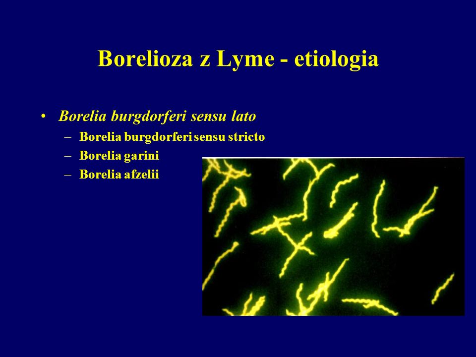 Borelioza z Lyme - etiologia Borelia burgdorferi sensu lato –Borelia burgdorferi sensu stricto –Borelia garini –Borelia afzelii