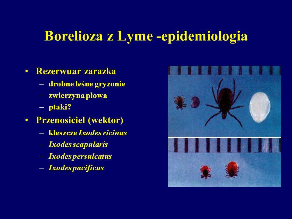 Borelioza z Lyme - leczenie I okres –Amoxycylina 2,0 - 3,0 g/dobę 21 dni –Doxycyklina 200 mg/dobę 21 dni II okres –neuroborelioza ceftrikson 2,0 g/dobę i.v.