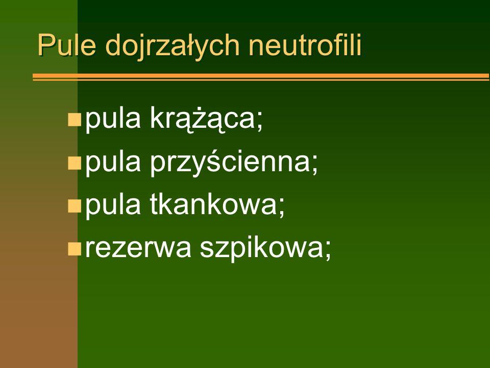 Czas trwania neutropenii n krótkotrwała –poniżej 1 tygodnia n trwała –1 tydzień-1 miesiąc n długotrwała –powyżej 1 miesiąca