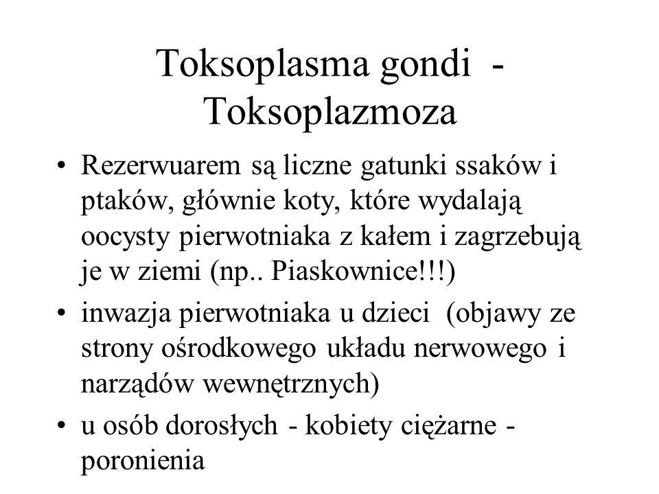 Toksoplasma gondi - Toksoplazmoza Rezerwuarem są liczne gatunki ssaków i ptaków, głównie koty, które wydalają oocysty pierwotniaka z kałem i zagrzebują je w ziemi (np..