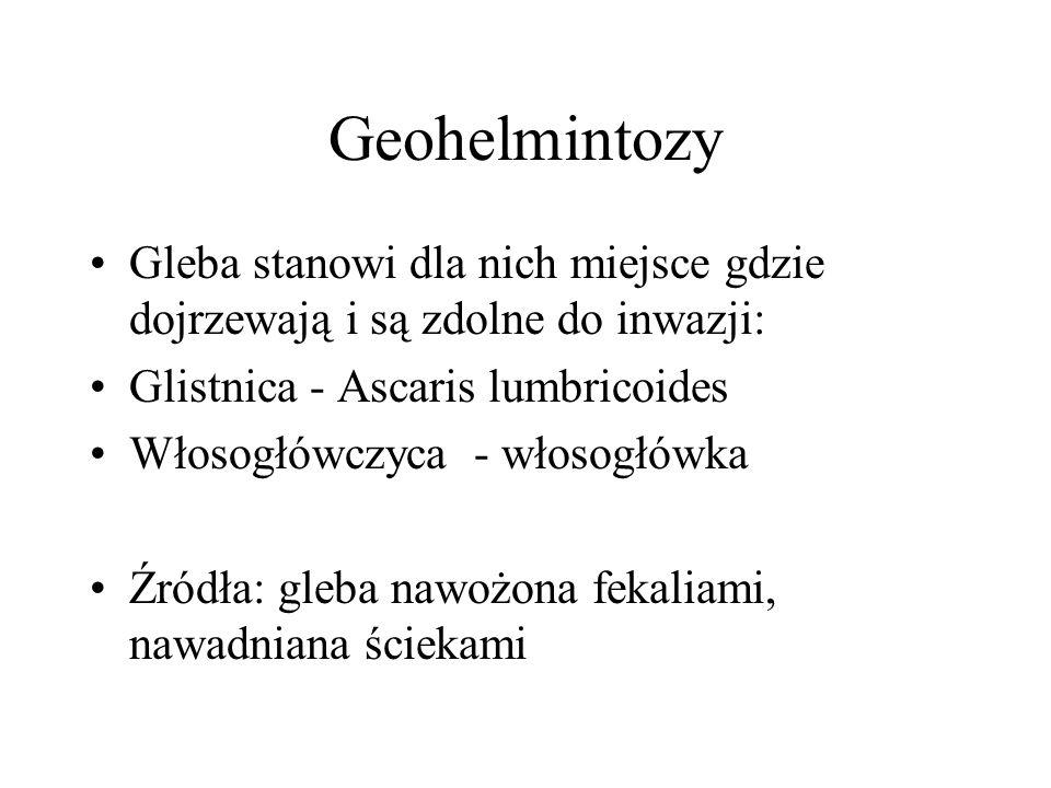 Geohelmintozy Gleba stanowi dla nich miejsce gdzie dojrzewają i są zdolne do inwazji: Glistnica - Ascaris lumbricoides Włosogłówczyca - włosogłówka Źródła: gleba nawożona fekaliami, nawadniana ściekami