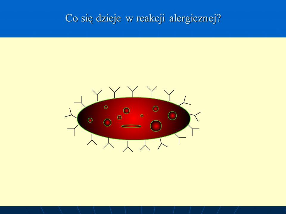 Co się dzieje w reakcji alergicznej? Flash created by D. Werner 11/24/0311/24/03