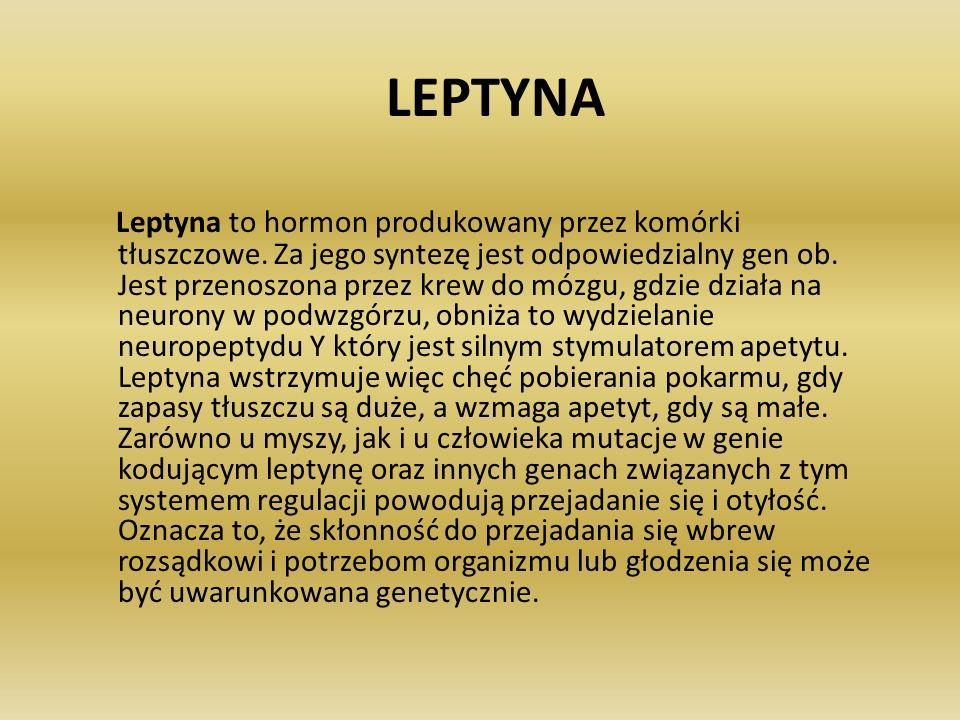 LEPTYNA Leptyna to hormon produkowany przez komórki tłuszczowe. Za jego syntezę jest odpowiedzialny gen ob. Jest przenoszona przez krew do mózgu, gdzi