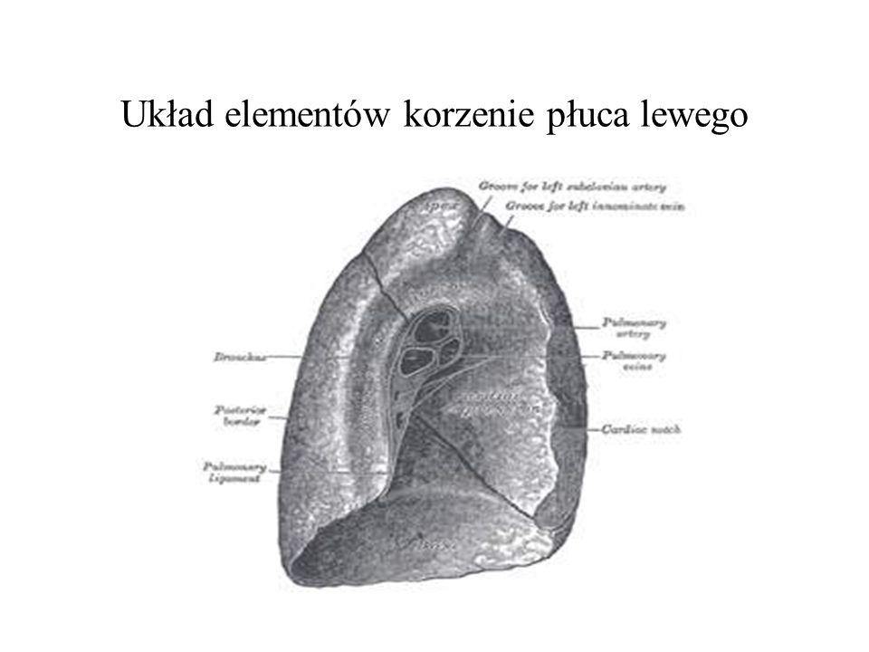 Układ elementów korzenie płuca lewego