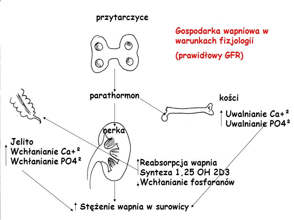 przytarczyce parathormon nerka Reabsorpcja wapnia Synteza 1,25 OH 2D3 Wchłanianie fosforanów kości Uwalnianie Ca+² Uwalnianie PO4² Jelito Wchłanianie