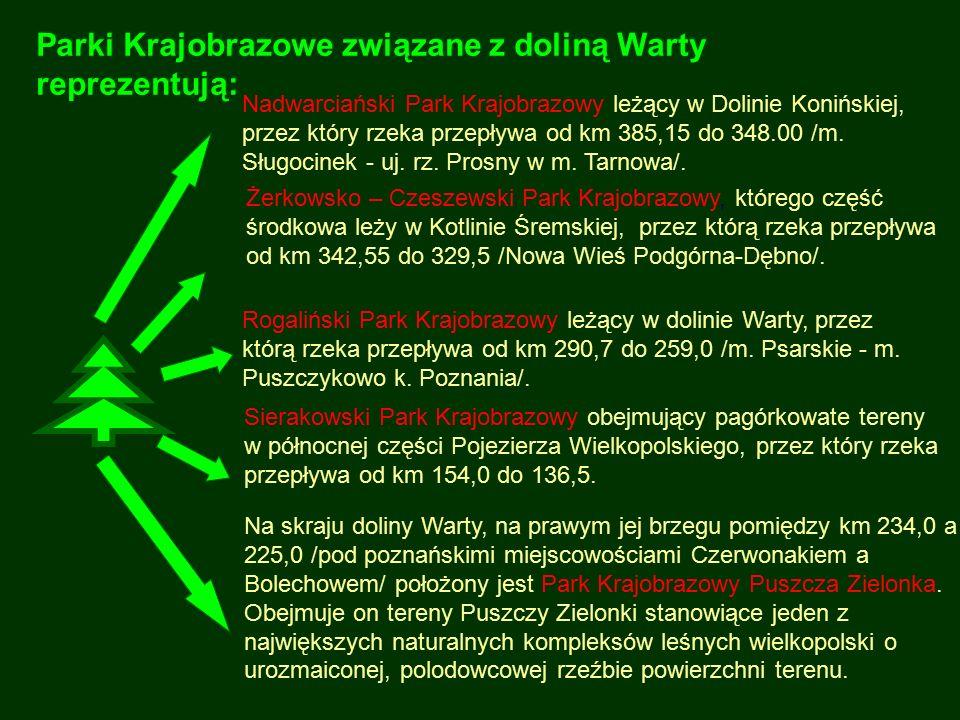 Parki Krajobrazowe związane z doliną Warty reprezentują: Na skraju doliny Warty, na prawym jej brzegu pomiędzy km 234,0 a 225,0 /pod poznańskimi miejs