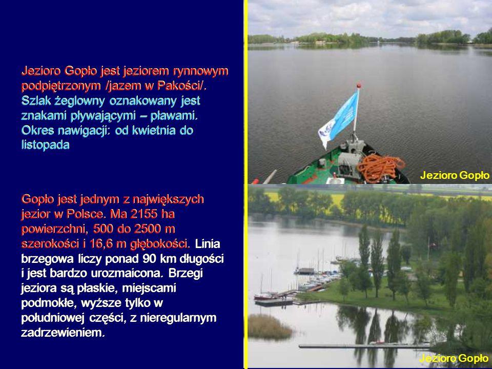 Gopło jest jednym z największych jezior w Polsce. Ma 2155 ha powierzchni, 500 do 2500 m szerokości i 16,6 m głębokości. Linia brzegowa liczy ponad 90