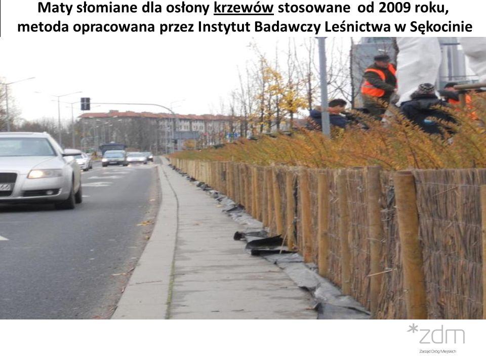 Maty słomiane dla osłony krzewów stosowane od 2009 roku, metoda opracowana przez Instytut Badawczy Leśnictwa w Sękocinie