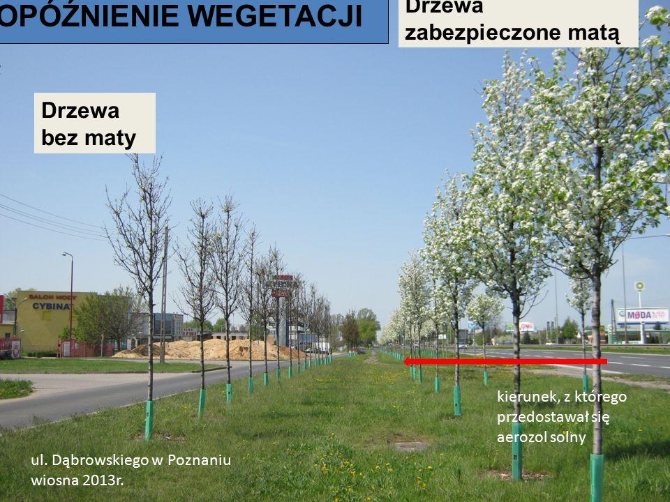 kierunek, z którego przedostawał się aerozol solny ul. Dąbrowskiego w Poznaniu wiosna 2013r. Drzewa zabezpieczone matą Drzewa bez maty OPÓŹNIENIE WEGE