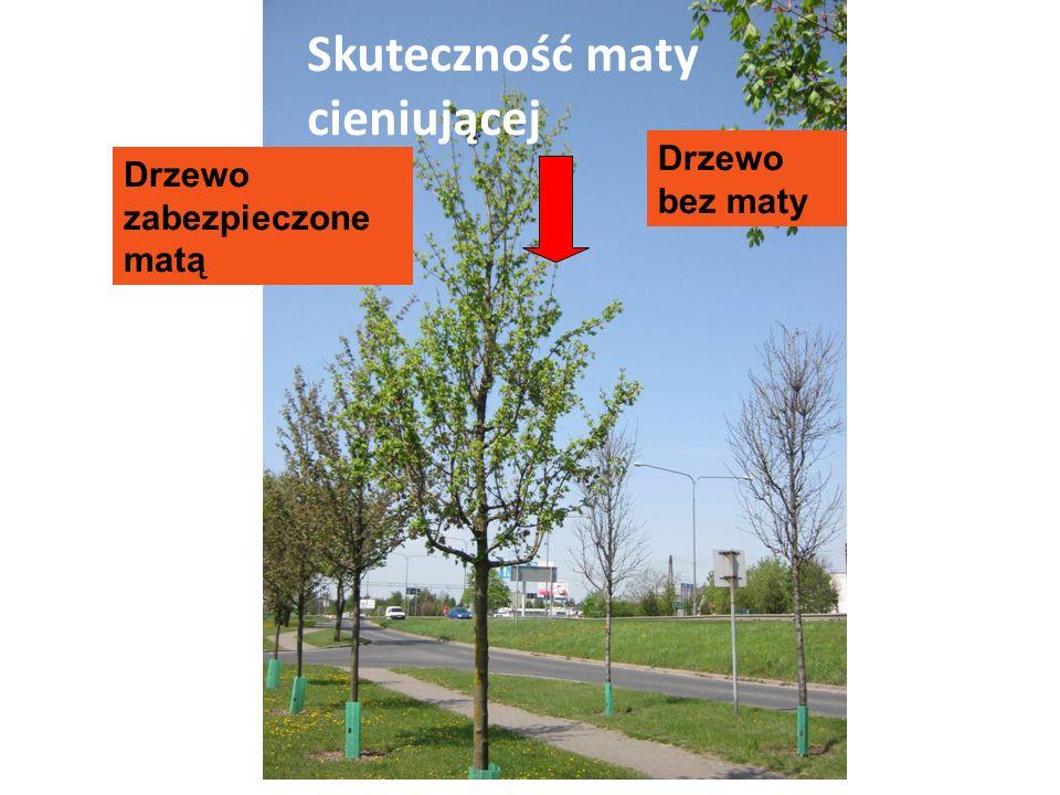 Skuteczność maty cieniującej Drzewo bez maty Drzewo zabezpieczone matą