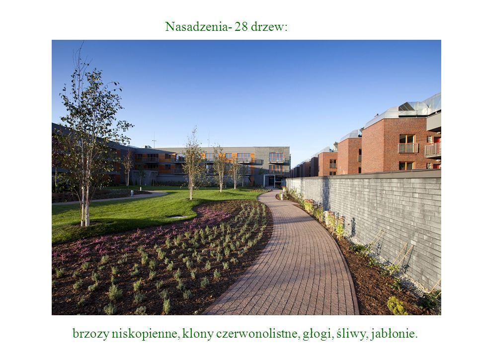 Nasadzenia- 28 drzew: brzozy niskopienne, klony czerwonolistne, głogi, śliwy, jabłonie.