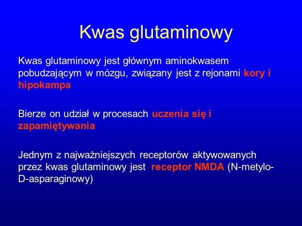 Kwas glutaminowy Kwas glutaminowy jest głównym aminokwasem pobudzającym w mózgu, związany jest z rejonami kory i hipokampa Bierze on udział w procesac