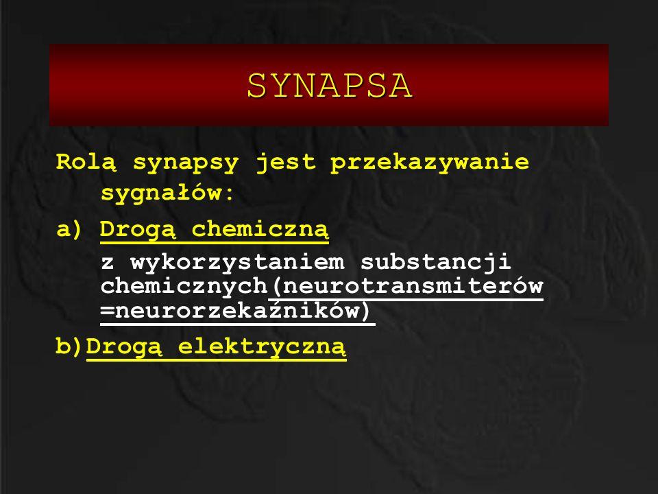 SYNAPSA Rolą synapsy jest przekazywanie sygnałów: a)Drogą chemiczną z wykorzystaniem substancji chemicznych(neurotransmiterów =neurorzekaźników) b)Dro