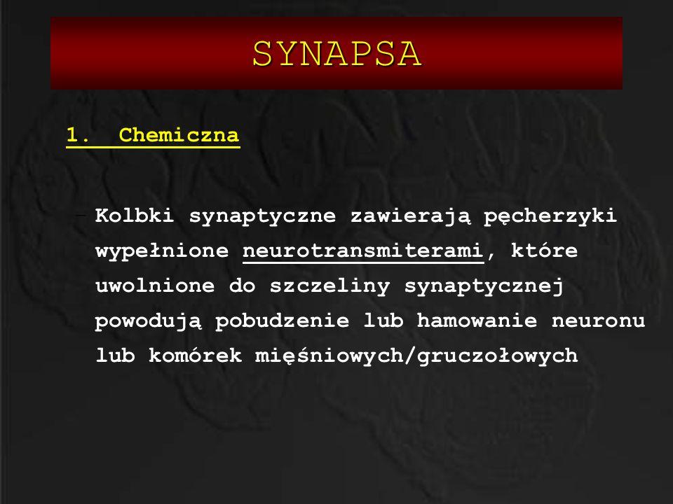 SYNAPSA 1. Chemiczna –Kolbki synaptyczne zawierają pęcherzyki wypełnione neurotransmiterami, które uwolnione do szczeliny synaptycznej powodują pobudz