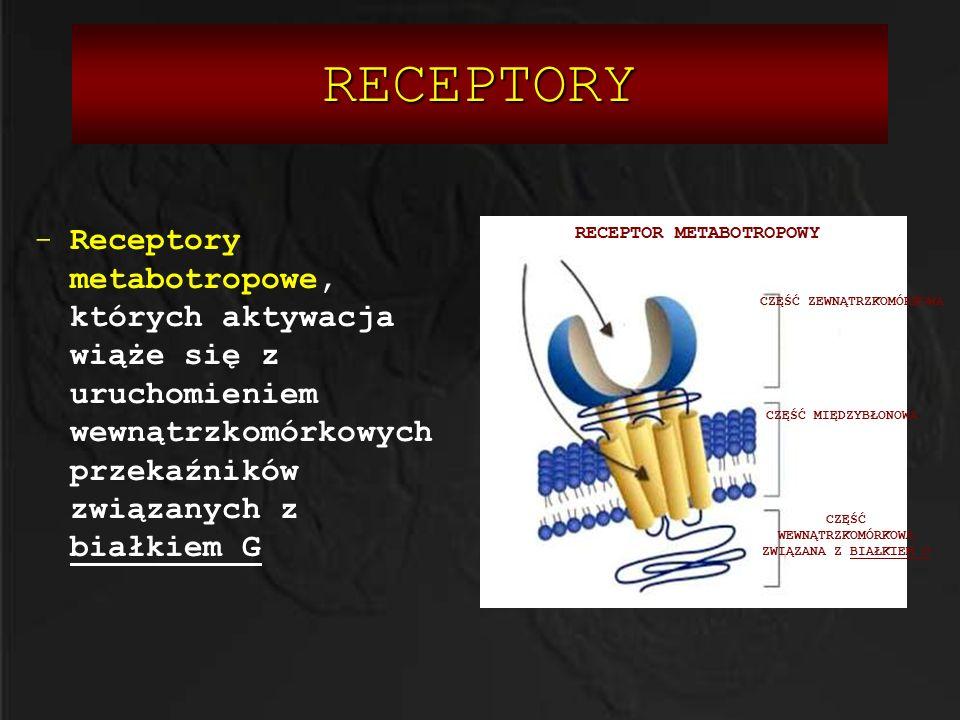 -Receptory metabotropowe, których aktywacja wiąże się z uruchomieniem wewnątrzkomórkowych przekaźników związanych z białkiem G CZĘŚĆ WEWNĄTRZKOMÓRKOWA