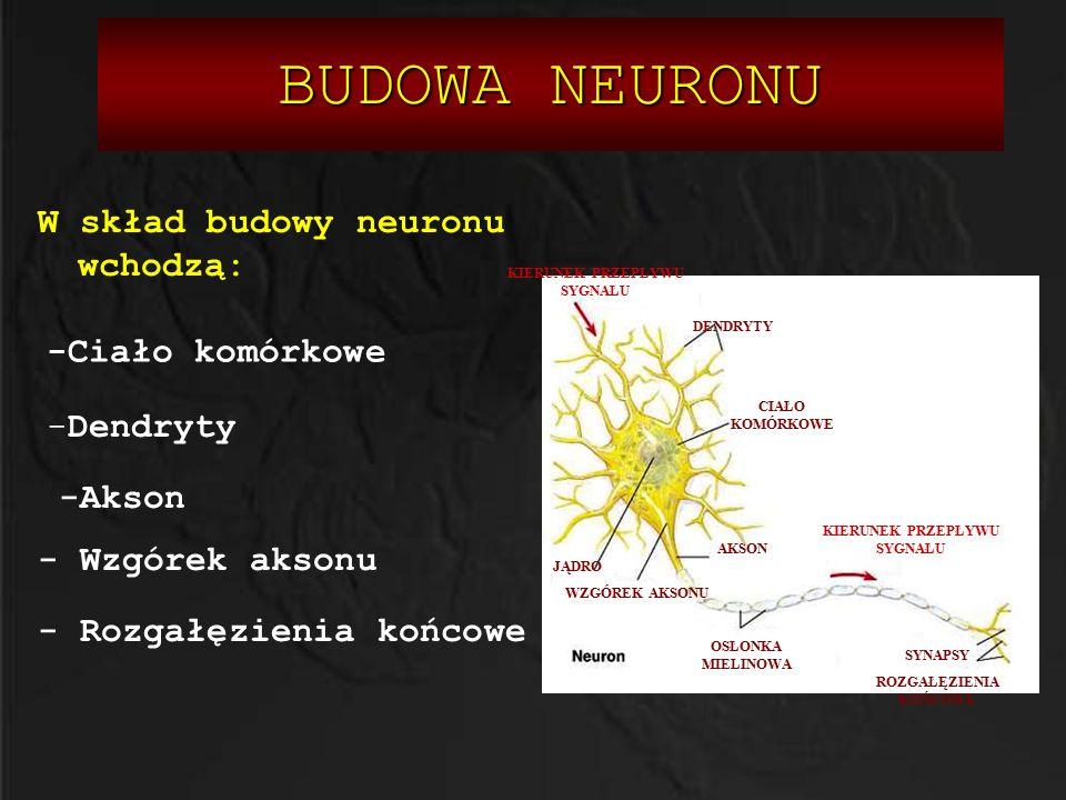  Glu jest głównym pobudzającym neuroprzekaźnikiem w OUN  Glu jest ściśle związany z procesami neuroplastyczności  Nadmierna aktywacja układu glutaminergicznego może prowadzić do ekscytotoksyczności  GABA jest głównym hamującym neuroprzekaźnikiem w OUN  Większość neuronów w OUN zawiera receptory dla GABA.