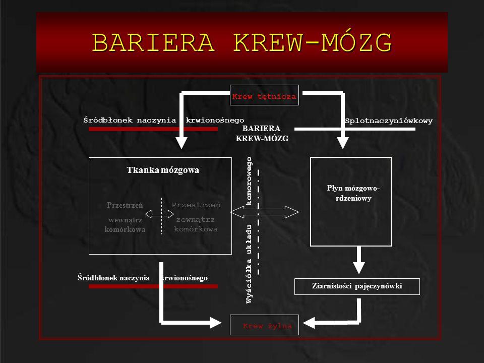 BARIERA KREW-MÓZG Krew tętnicza Krew żylna Płyn mózgowo- rdzeniowy Tkanka mózgowa Przestrzeń wewnątrz komórkowa Przestrzeń zewnątrz komórkowa Ziarnist
