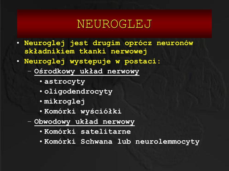 NEUROGLEJ NEUROGLEJ ASTROCYTY -występują w stosunku 50:1 względem neuronów -Ich wypustki budują barierę krew-mózg -Posiadają właściwości czynnego transportu cząstek przez cytoplazmę i transportu jonów -Formują zrąb OUN -Biorą udział w tworzeniu blizny glejowej ASTROCYTY NACZYNIE KRWIONOŚNE