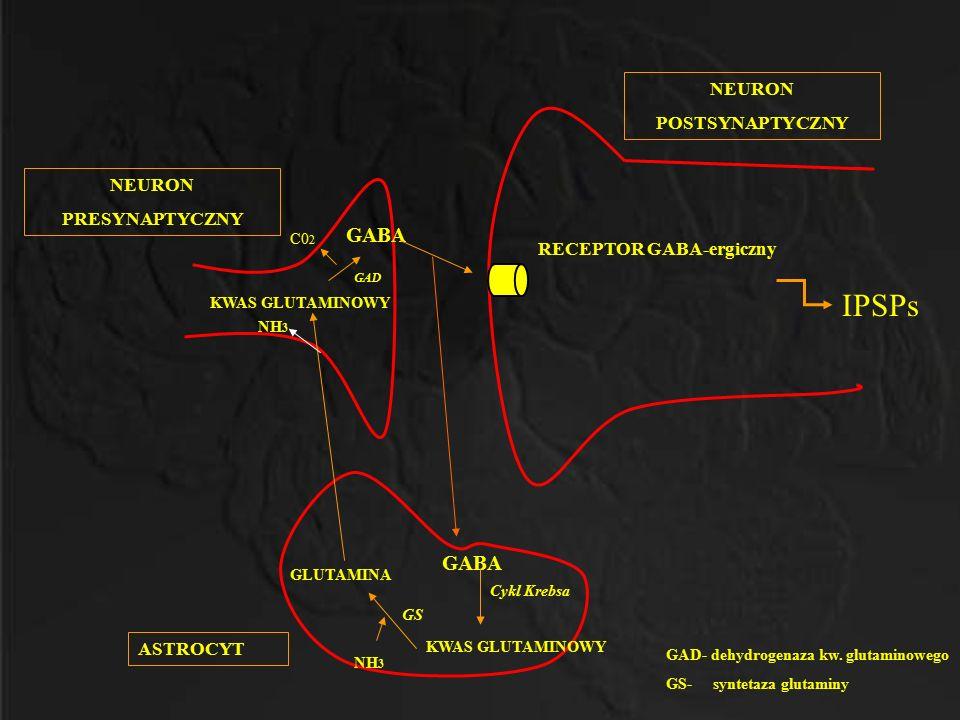 GAD- dehydrogenaza kw. glutaminowego GS- syntetaza glutaminy IPSPs GABA KWAS GLUTAMINOWY GLUTAMINA KWAS GLUTAMINOWY NH 3 GAD C0 2 ASTROCYT NEURON POST