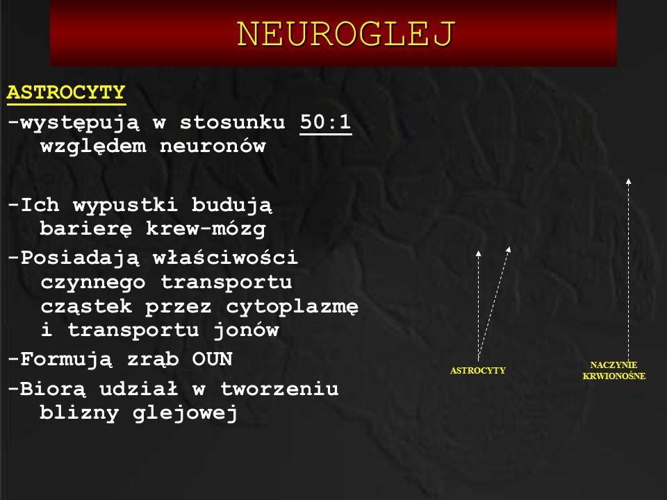 NEUROGLEJ NEUROGLEJ ASTROCYTY -występują w stosunku 50:1 względem neuronów -Ich wypustki budują barierę krew-mózg -Posiadają właściwości czynnego tran