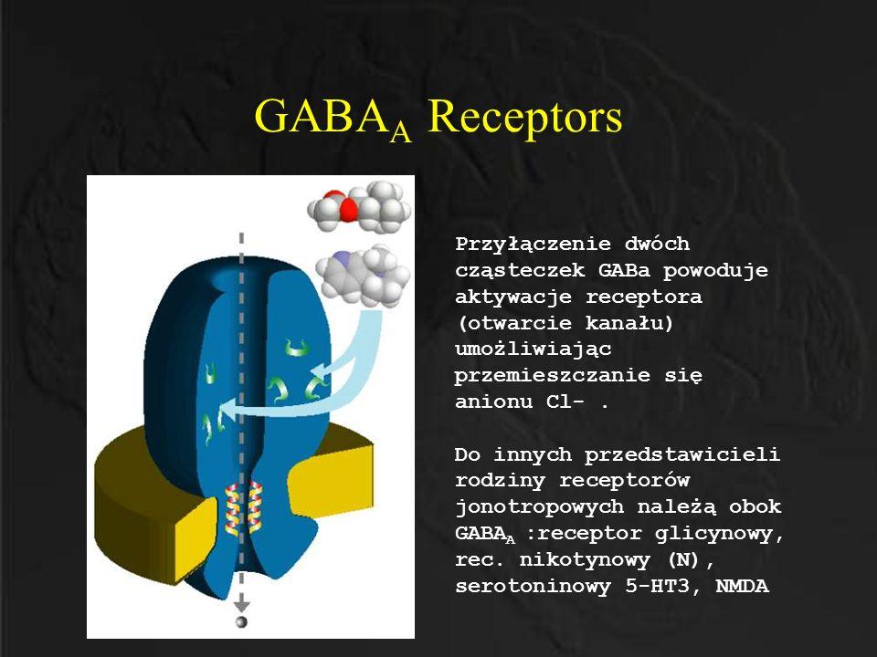GABA A Receptors Przyłączenie dwóch cząsteczek GABa powoduje aktywacje receptora (otwarcie kanału) umożliwiając przemieszczanie się anionu Cl-. Do inn
