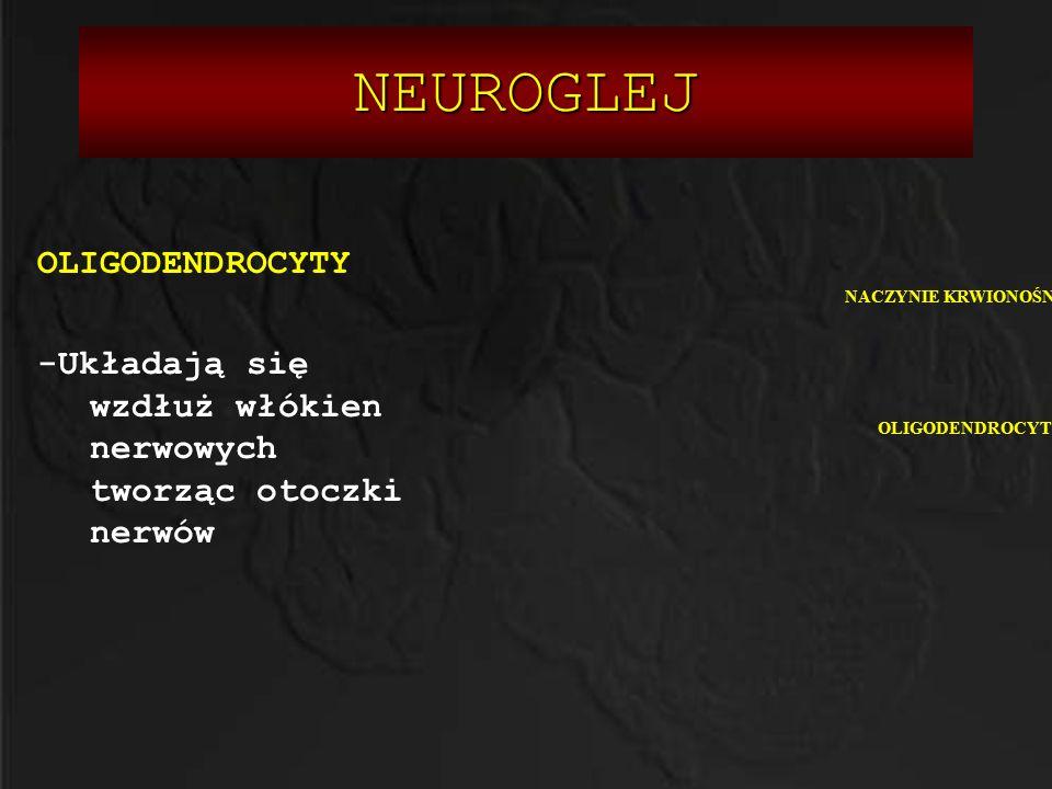Neurotransmitery 1.